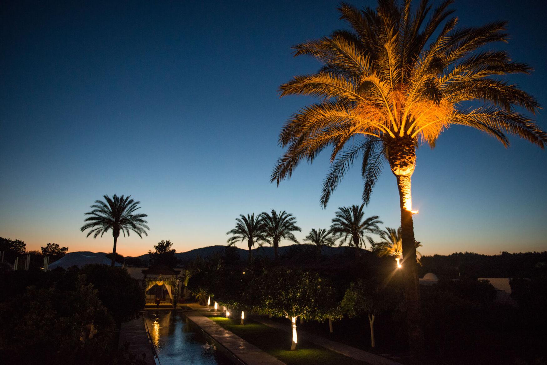 night sky dusk poolside palm trees